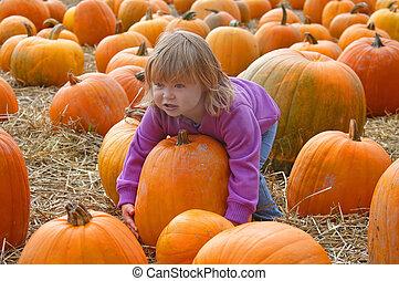 harvest 7002 - girl and pumpkins