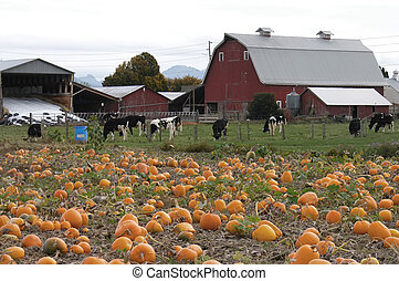 Harvest 7078 - pumpkin patch