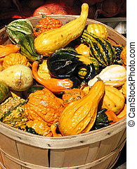 Gourds in a basket - Colorful gourds in a basket