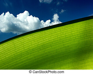 Ecology green - Macro of a green leaf with a blue sky with...