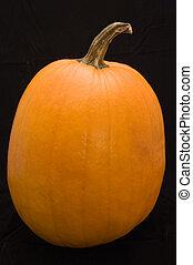 Pumpkin on Black Background - orange pumpkin, ready to be...