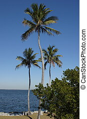 Palm Trees at the Biscayne National Park visitor center.