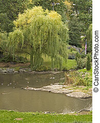Willow Pond - This is a shot of a small pond and a weeping...