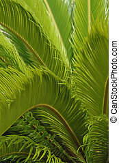 Green Fern Bckgrnd. - Vertical - close up of green ferns for...