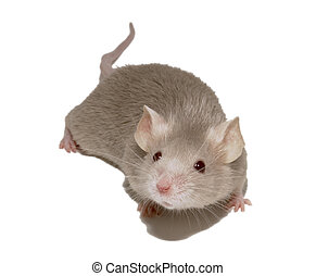 mouse 5 - small mouse