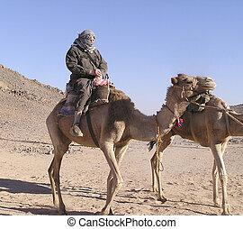 avô, turista, camelo, 4, sahara, Egito, África