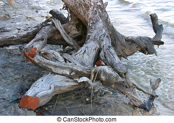Driftwood - Pile of driftwood