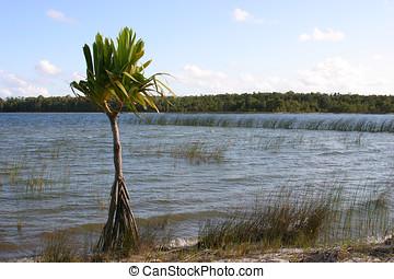 Lone palmtree - Palmtree by the waterside