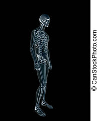 Xray, x-ray of the human male body.