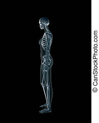 Xray, x-ray of the human female body