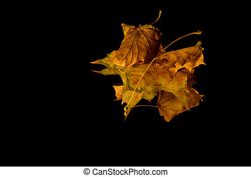 Isolated Close up on Three Leaves