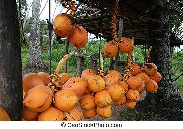król, orzechy kokosowe, 2
