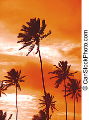 Sunset palms - Palm trees silhouetted against the evening...