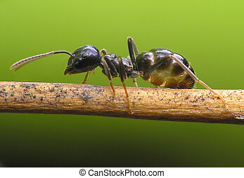 Ant on bridge
