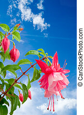 Fuschia Skies - Spring sky and flowers The annual growth