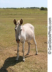 Donkey - a donkey on a farm