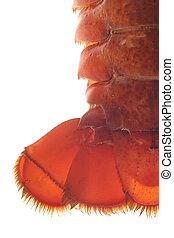 Lobster - lobster
