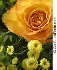 golden wedding rose - photograph of a very beautiful golden...