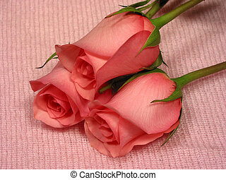 Baby pink 1 - Pink roses on soft pink mohair