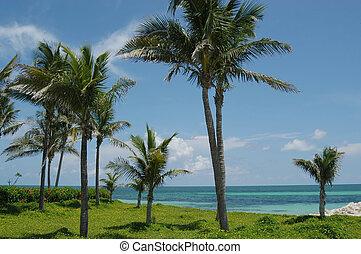 Bahamas beach - Beach and palms, Freeport, Bahamas islands