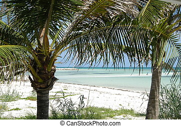 Bahamas beach - Beach through the palms, Freeport, Bahamas...