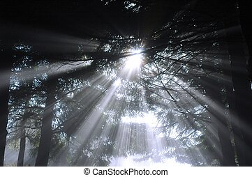 sumbeams in forest