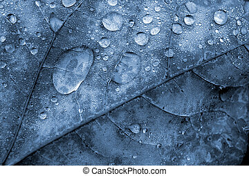 Blue Leaf with Water Droplets Macro
