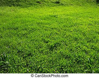 Green grass - area of peacefull green grass