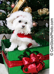Santa Puppy in gift under the christmas tree
