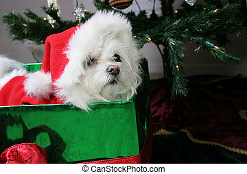 Is it christmas yet - Puppy in gift under christmas tree