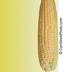 Corn on the Cob - Fresh Corn Isolated