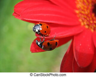 Ladybugs', Meeting