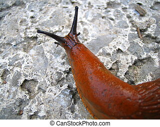 Slimy Slug - This slug's got to make a living too!