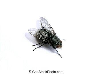 fly - A macro fly