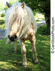 Bad Hair Day - A cream white and beige Welsh Mountain wild...
