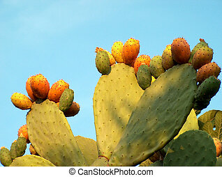 fico dindia01 - Indian fig or prickly pear in South Italy...