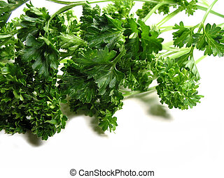 Fresh parsley on white background 2 - Fresh bright green...