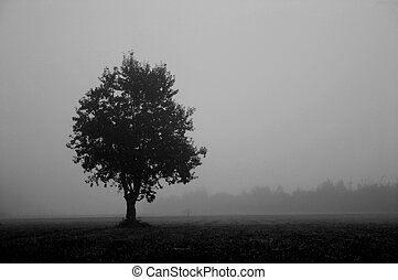 tree #2 (contrasty b&w) - artist's vision of a foggy morning...