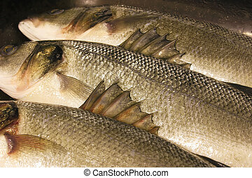 sea bass barbed fins - details of the barbs on the fins of a...