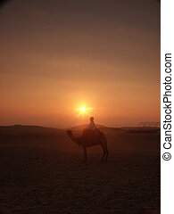 Camel with driver near Gizeh in the Sahara.