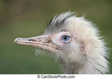 Funny Bird - Funny Strange Bird