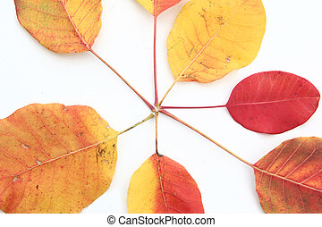 autumn leaves on white isolated background