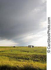 Prairie Field