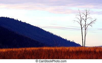 Lone Tree - a tree landscape