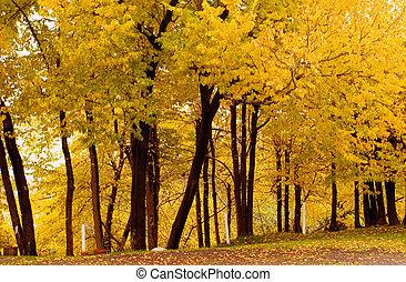 otoño, Color, corcho, olmo, Grove1