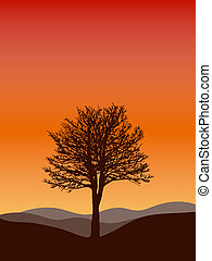 Winter tree with sunset