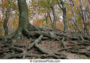 Tree roots - tree roots