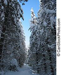 the narrow path - heavy snowfall on hiking trail in the...