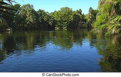 Lagoon - A blue jungle lagoon