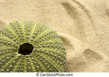 Sea Urchin on Sand - Green sea urchin discarded on a sandy...